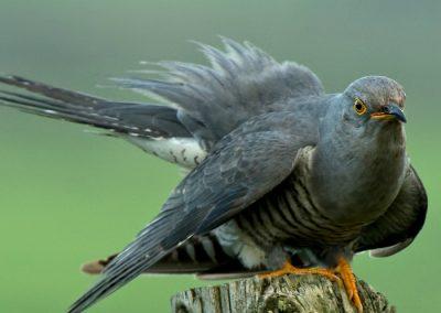 ver aves sierra Madrid