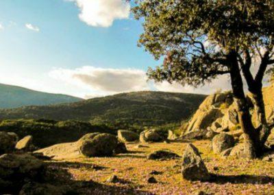 Raices-de-Cercedilla-Ruta-por-Sierra-de-Madrid