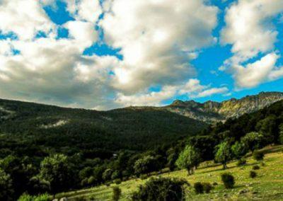 Raices-de-Cercedilla-Sierra-de-Guadarrama