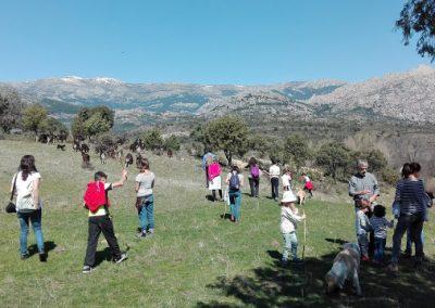Sierra de Madrid Cabra Guadarrameña