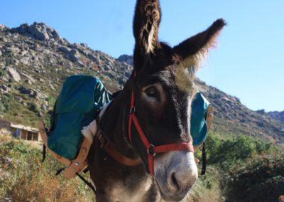 burros sierra madrid