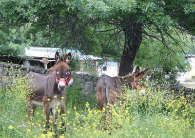 montar en burro en Madrid
