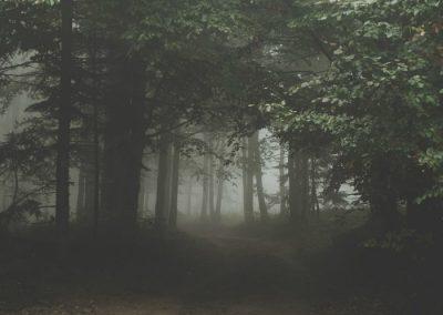 naturaleza de noche senderismo