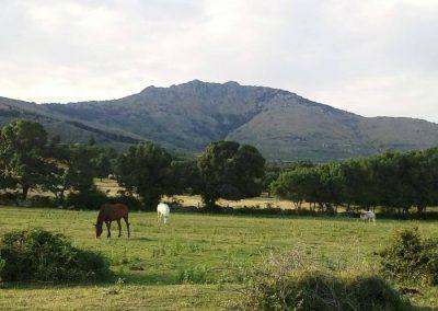 campamentos  madrid