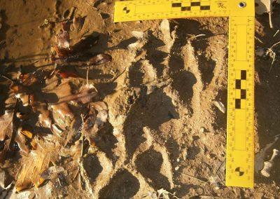 rastros de animales en madrid