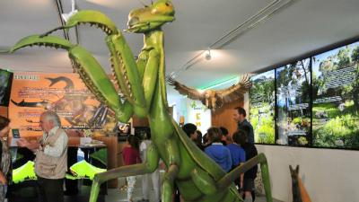 museo de insecto