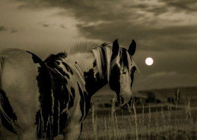 ruta nocturna caballo los molinos