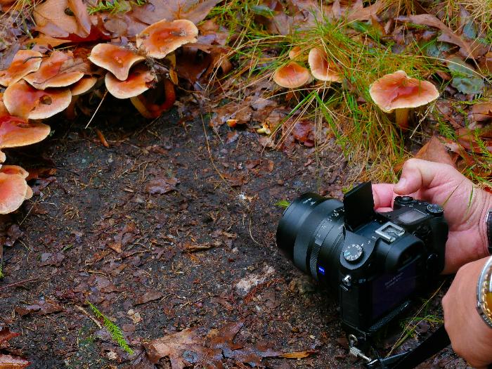 Taller de Fotografía Micológica