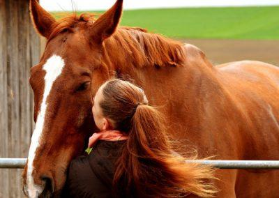 meditacion madrid y caballos