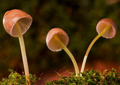 jornadas micologicas cercedilla hoyo