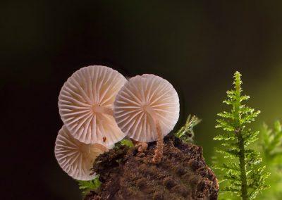 micologicas hoyo cercedilla