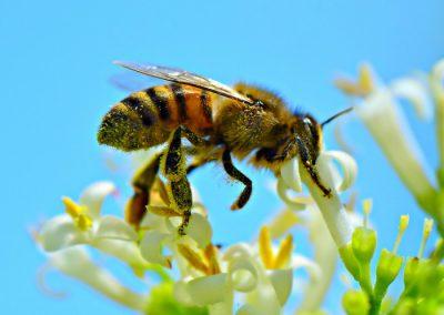 miel y abejas madrid