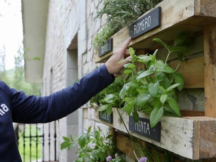 Taller de Plantas Aromáticas