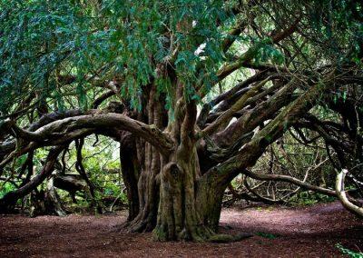 árboles singulares madrid
