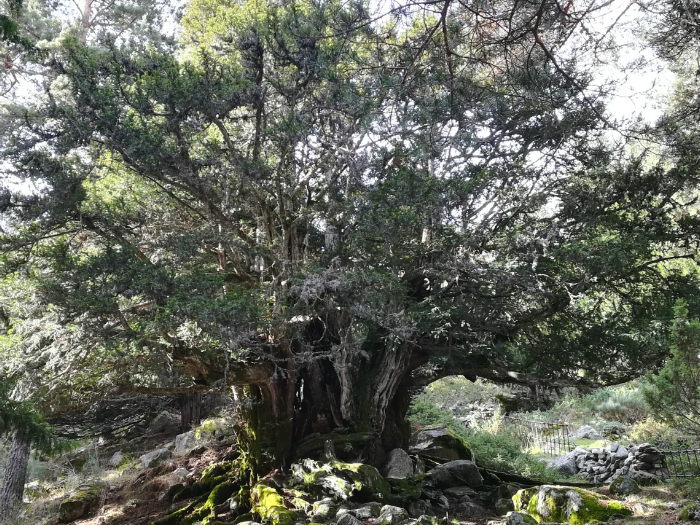 ruta senderismo árboles singulares