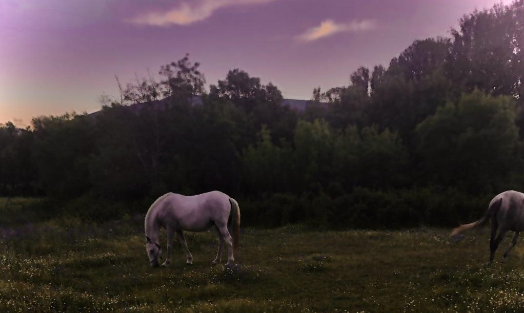 ruta nocturna a caballo