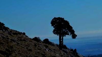 senderismo medioambiental pino san roque