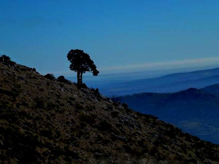 ruta senderismo noche pino san roque