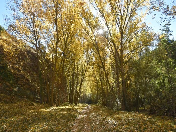 Ruta Medioambiental Otoñal Hoces del Río Duratón