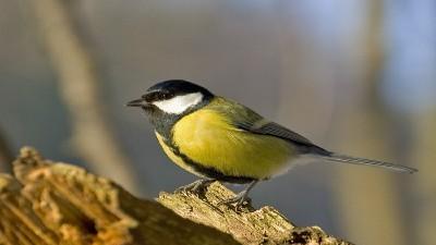 observación aves sierra