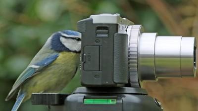 retoque fotografico fauna