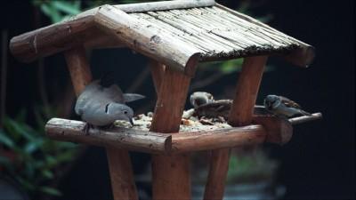 comederos aves  familia