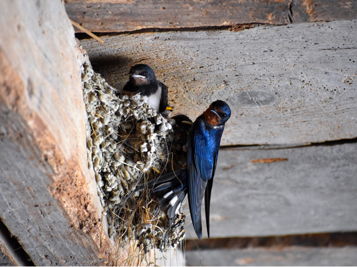 taller aves insectivoras madrid